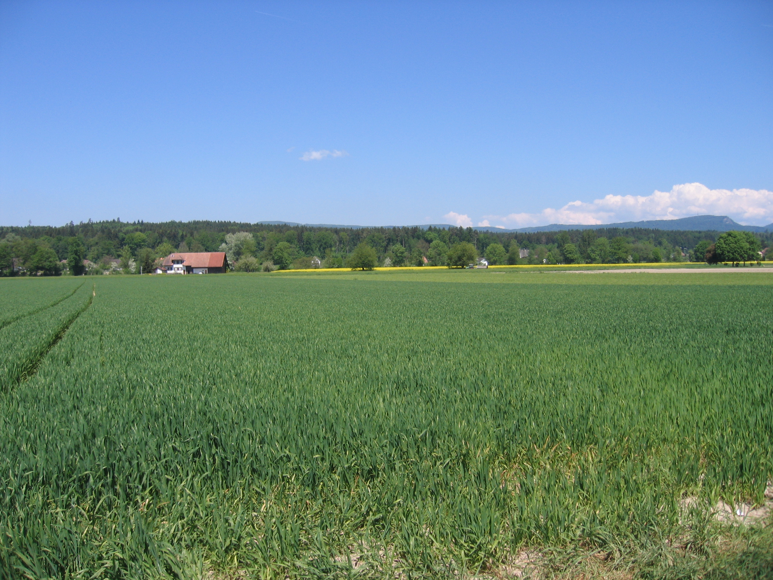 view of the fields / farm at end our street