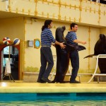 sea-lion-and-trainers-doing-a-train-dance