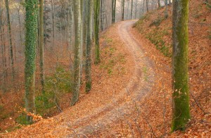 forest-track-in-autumn1