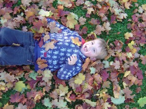 toby-and-the-leaves1